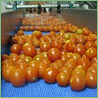 Tomato Washing and Drying lin